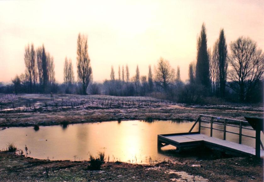 Brandon marsh frost